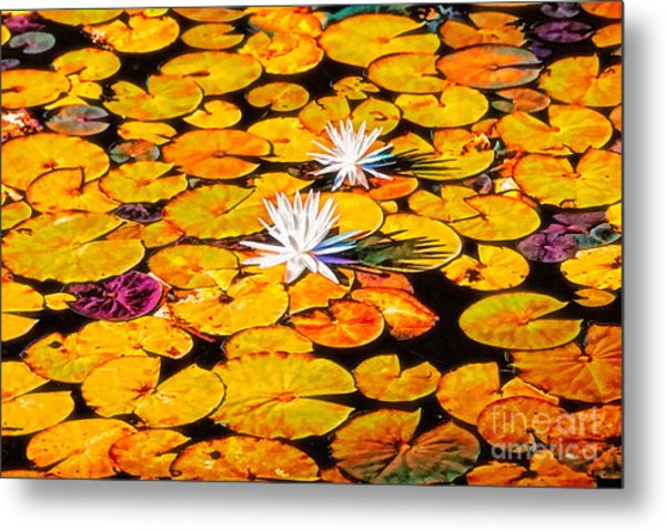 Virginia Lilies Metal Print
