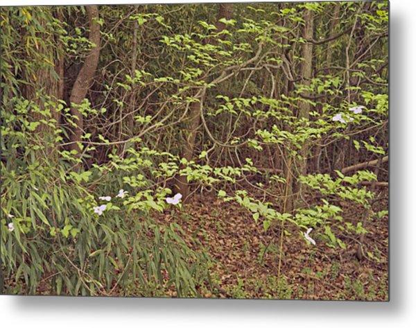 Virginia Woods Photo Metal Print by Peter J Sucy