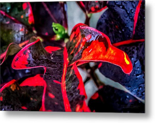 Visions Of Red Metal Print