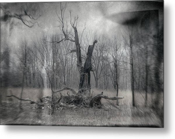 Visitor In The Woods Metal Print