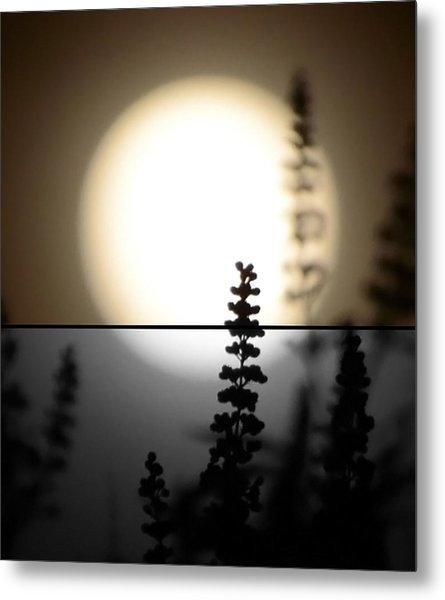 Vitex Moon Metal Print