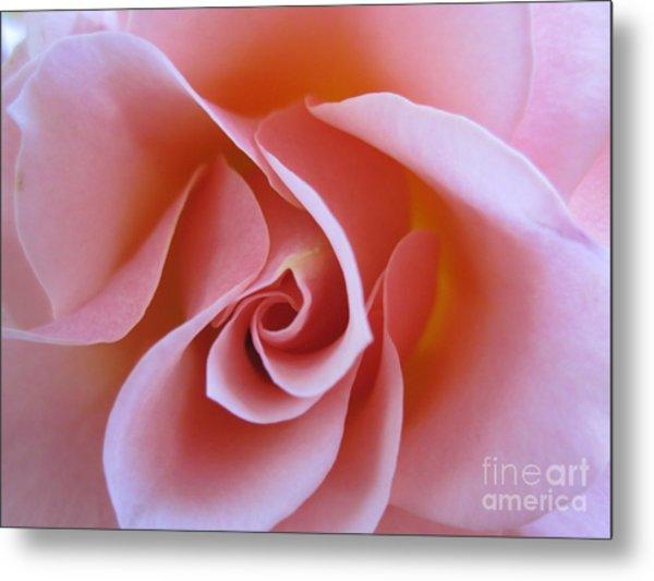 Vivacious Pink Rose Metal Print