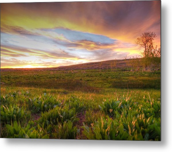 Vivid Sunset Metal Print