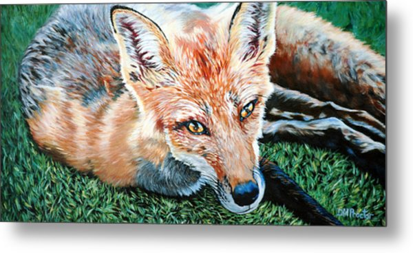 Metal Print featuring the painting Vixen - Red Fox by Donna Proctor