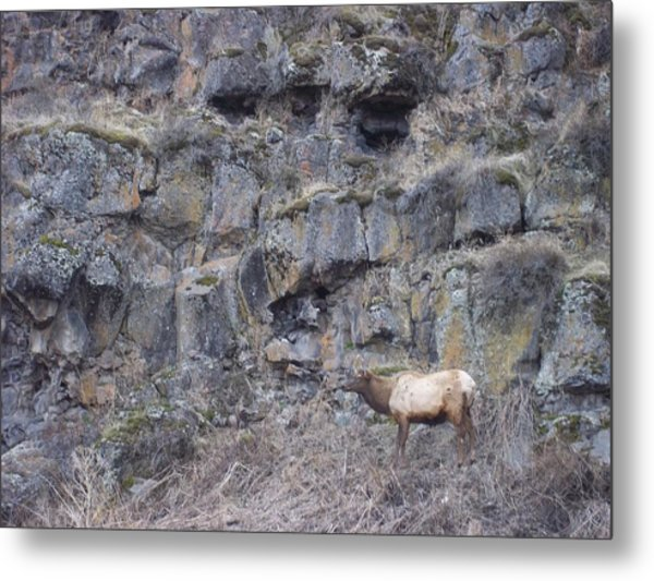 Volcanic Formation And Elk Metal Print