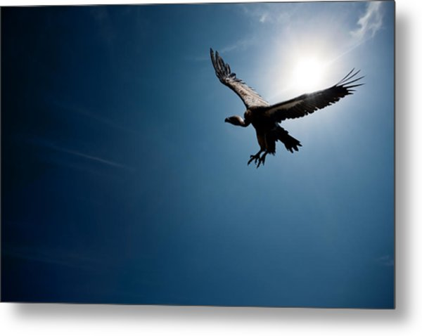 Vulture Flying In Front Of The Sun Metal Print