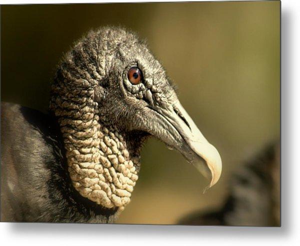 vulture II Metal Print