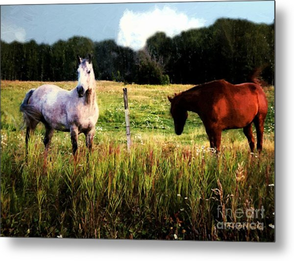 Waiting For Apples Metal Print