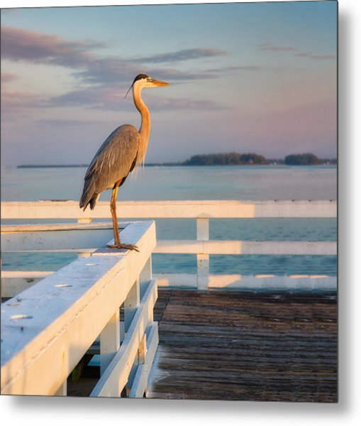 Waiting For The Fishing Boats To Arrive Metal Print