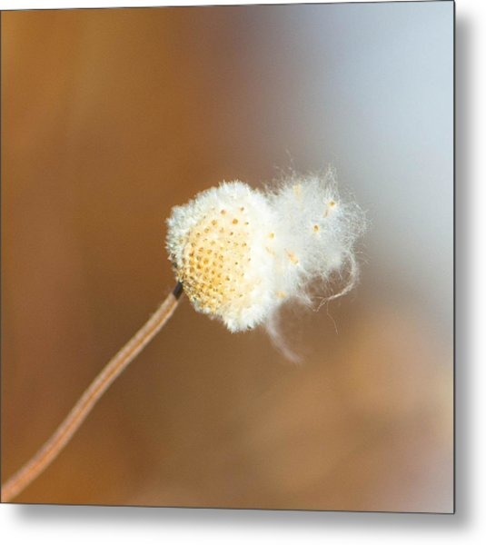 Waiting For The Wind Metal Print by Sarah Crites