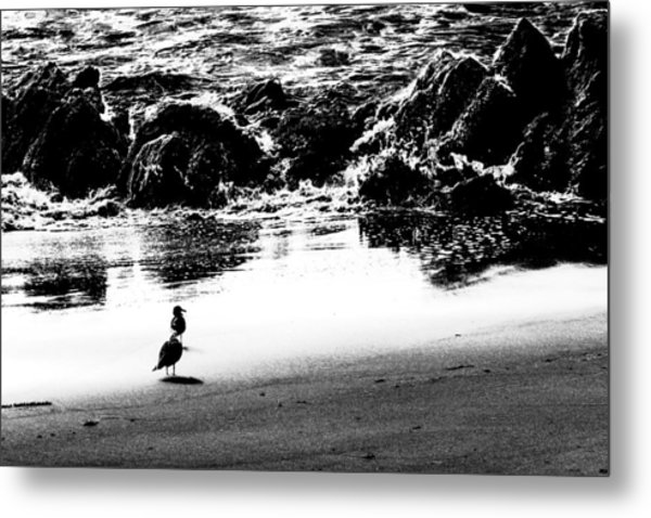 Waiting For Their Meal Black And White Metal Print