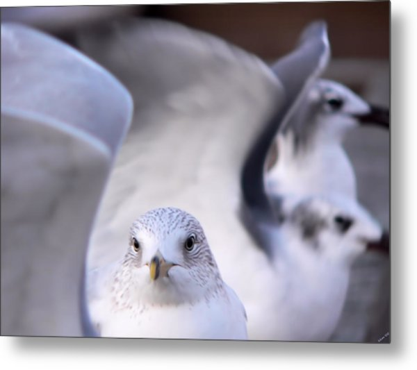 Waiting In The Wings Metal Print