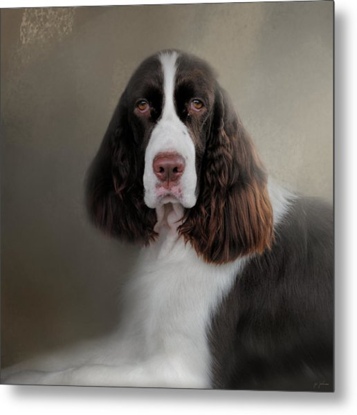 Waiting Patiently - English Springer Spaniel Metal Print