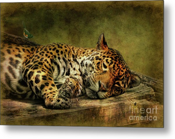 Wake Up Sleepyhead Metal Print