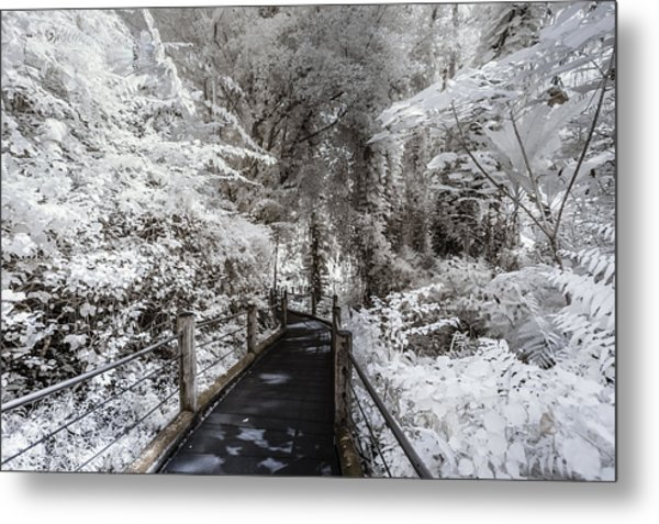 Walking Into The Infrared Jungle 1 Metal Print