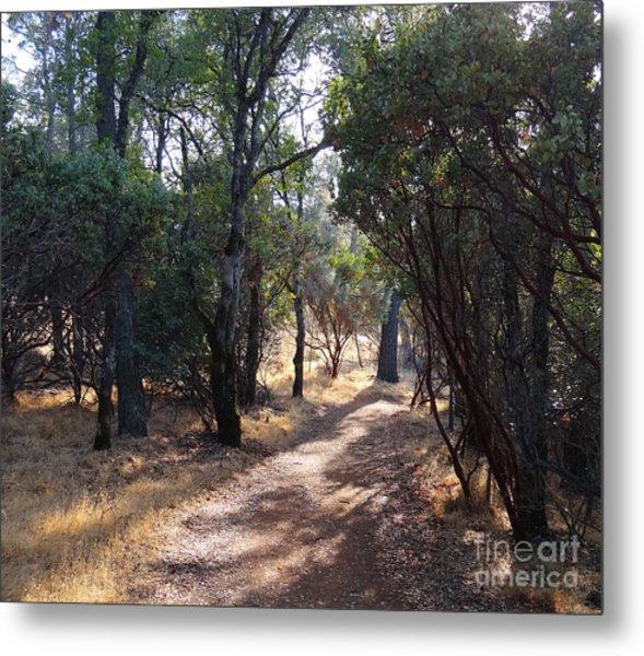 Walking Trail Metal Print