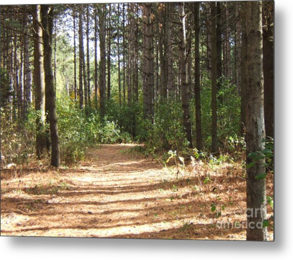 Walking Trail Metal Print by Margaret McDermott