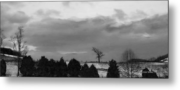 Walnut Tree In Bw Metal Print