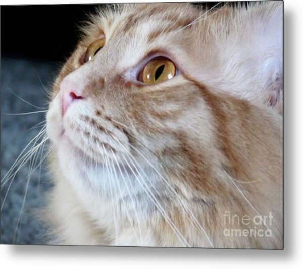 Walter The Cat Metal Print