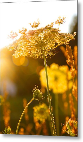 Warmth Of The Sun Metal Print