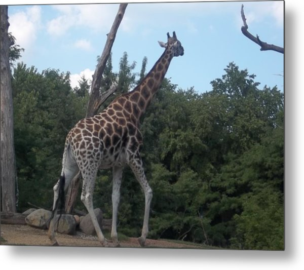 Metal Print featuring the photograph Wandering Griffe by Artistic Panda