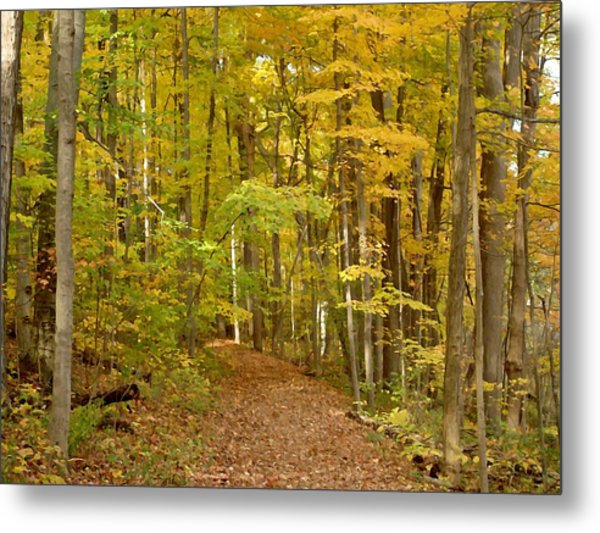 Wandering Trail 6 Metal Print by BackHome Images