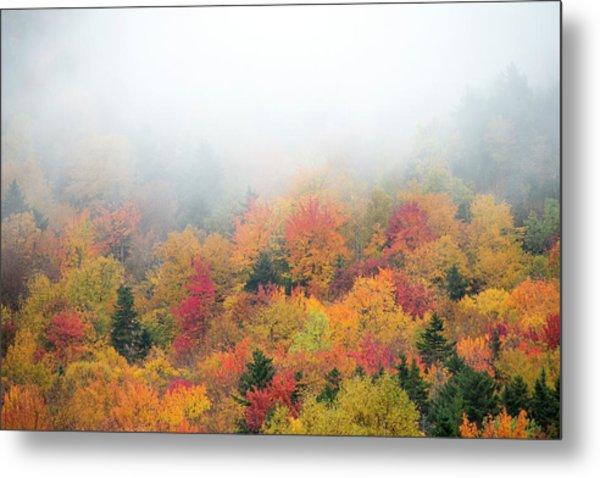 Warm Autumn Colors Blanket The Tree Metal Print