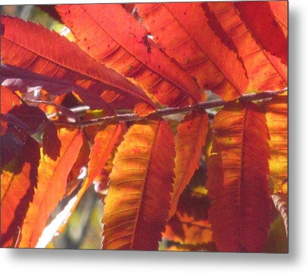 Warm Autumn Sun Metal Print by Loretta Pokorny