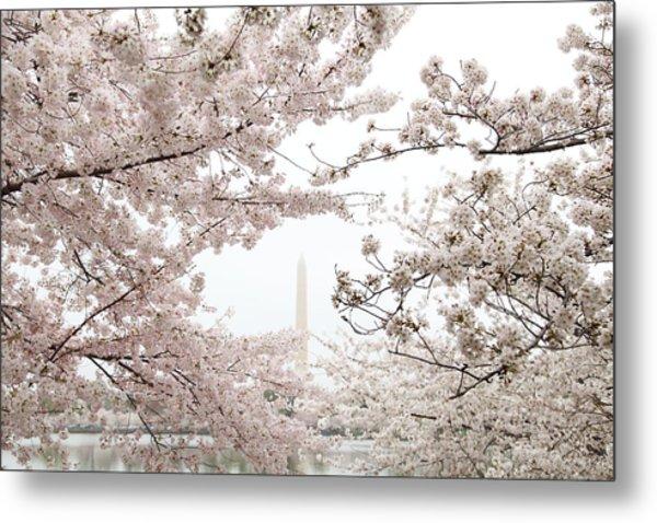 Washington Monument - Cherry Blossoms - Washington Dc - 011343 Metal Print by DC Photographer