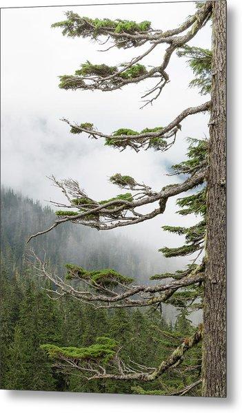 Washington, Mount Rainier National Park Metal Print by Jaynes Gallery