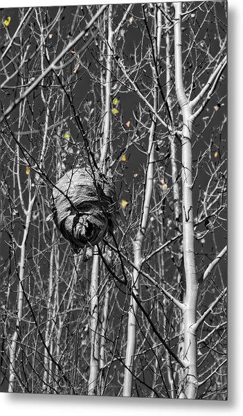 Wasp Nest In Aspen Metal Print
