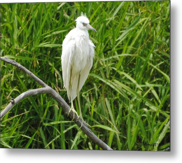 Watchful Heron Metal Print