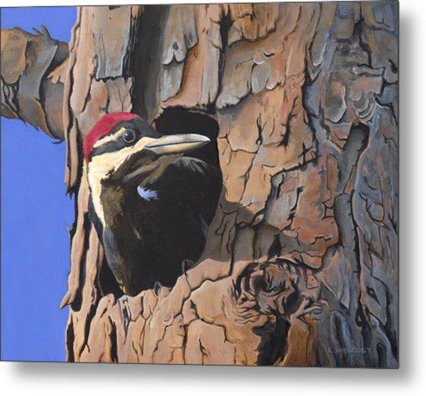 Watchful Woodpecker Metal Print by Kirsten Wahlquist