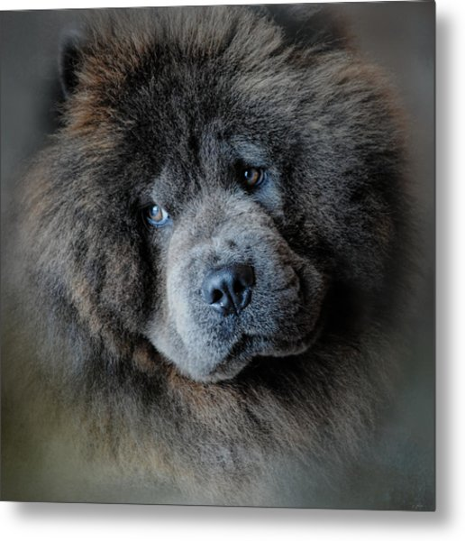 Watching Master - Blue Chow Chow Metal Print
