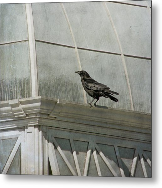 Metal Print featuring the photograph Watching by Sally Banfill