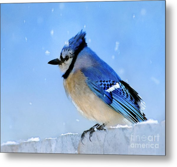 Watching The Snow Metal Print