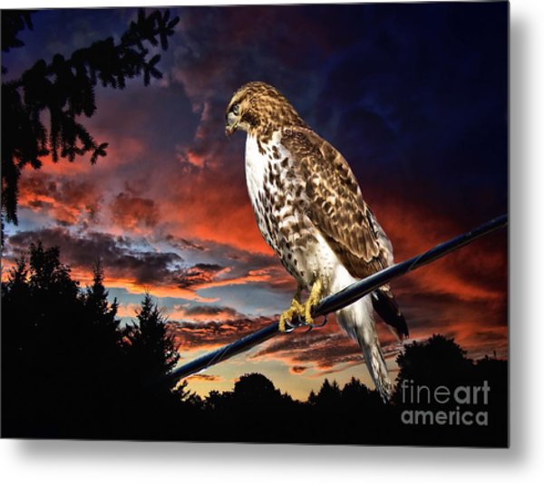 Watching The Sun Set Metal Print
