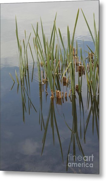 Metal Print featuring the photograph Reflection by Angela Moyer