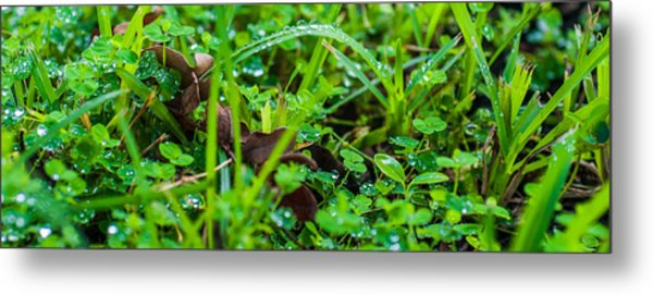 Water Drops On The  Grass 0052 Metal Print by Terrence Downing