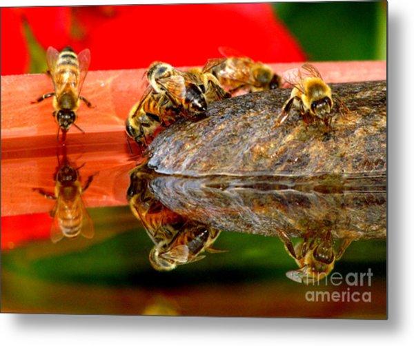 Water For Honey Bees 2 Metal Print