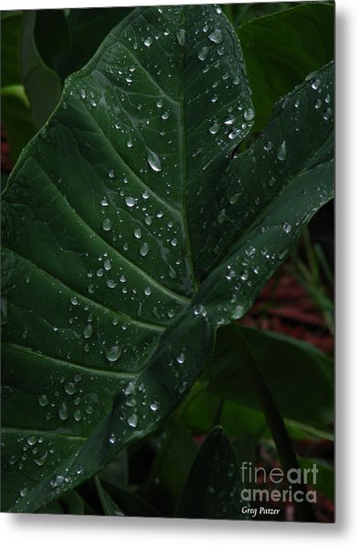 Water In My Ear Metal Print by Greg Patzer