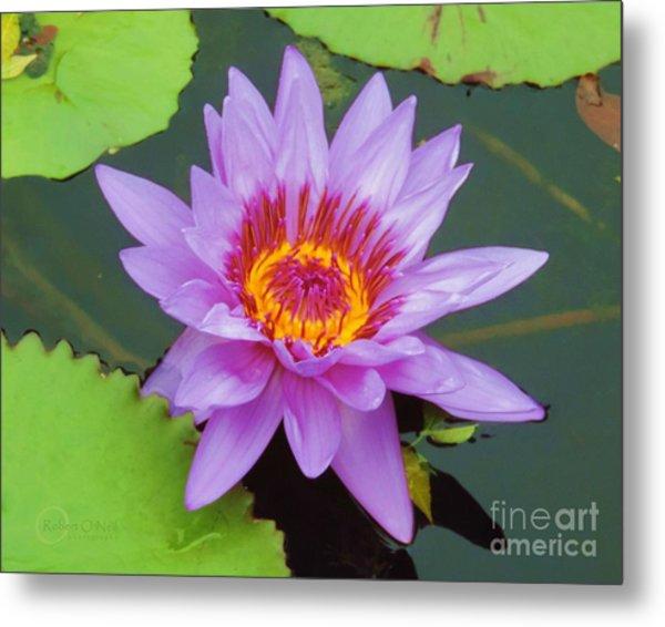 Water Lilies 005 Metal Print