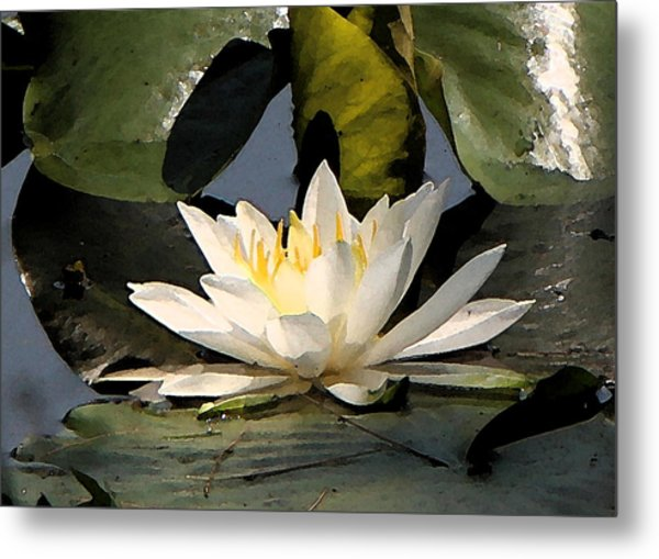 Metal Print featuring the photograph Water Lilly by Jim Baker