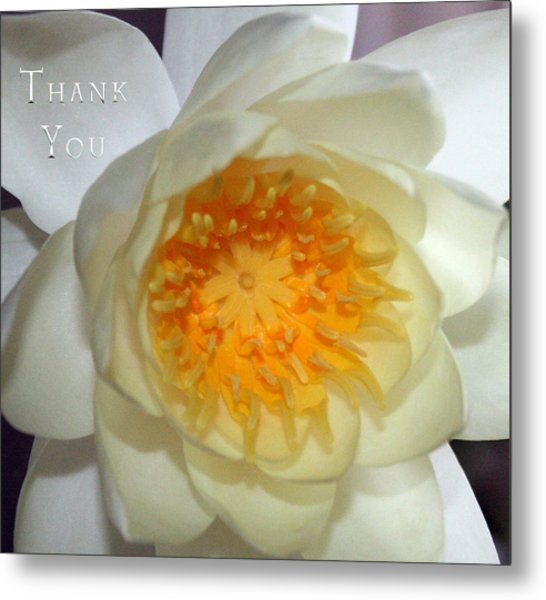 Water Lily 2  And A Reminder To Utter The Words Thank You.  Metal Print