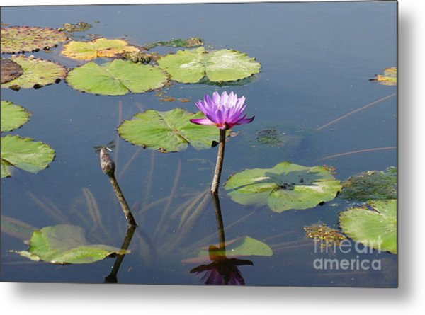 Water Lily And Dragon Fly One Metal Print