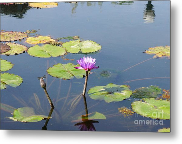 Water Lily And Dragon Fly Two Metal Print