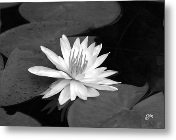 Water Lily On Pad Metal Print