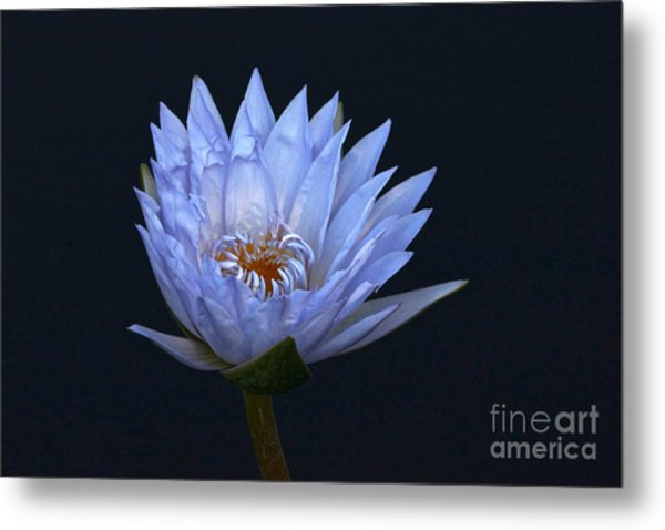 Water Lily Shades Of Blue And Lavender Metal Print