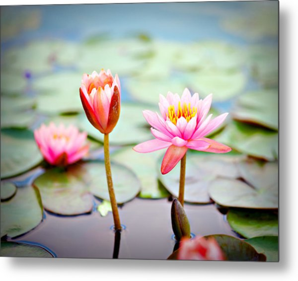 Water Lily's II Metal Print by Tammy Smith