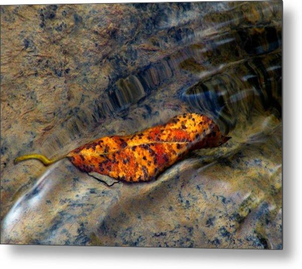 Water Logged Metal Print
